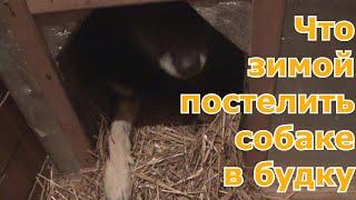 Какую подстилку положить зимой собаке в будку чтобы было тепло и сухо