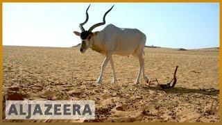 Niger oil exploration plan threatens West Africa's major reserve