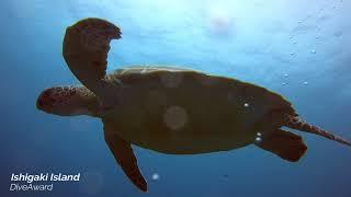 DiveAward 石垣島ツアー 2021,ゴールデンウィーク