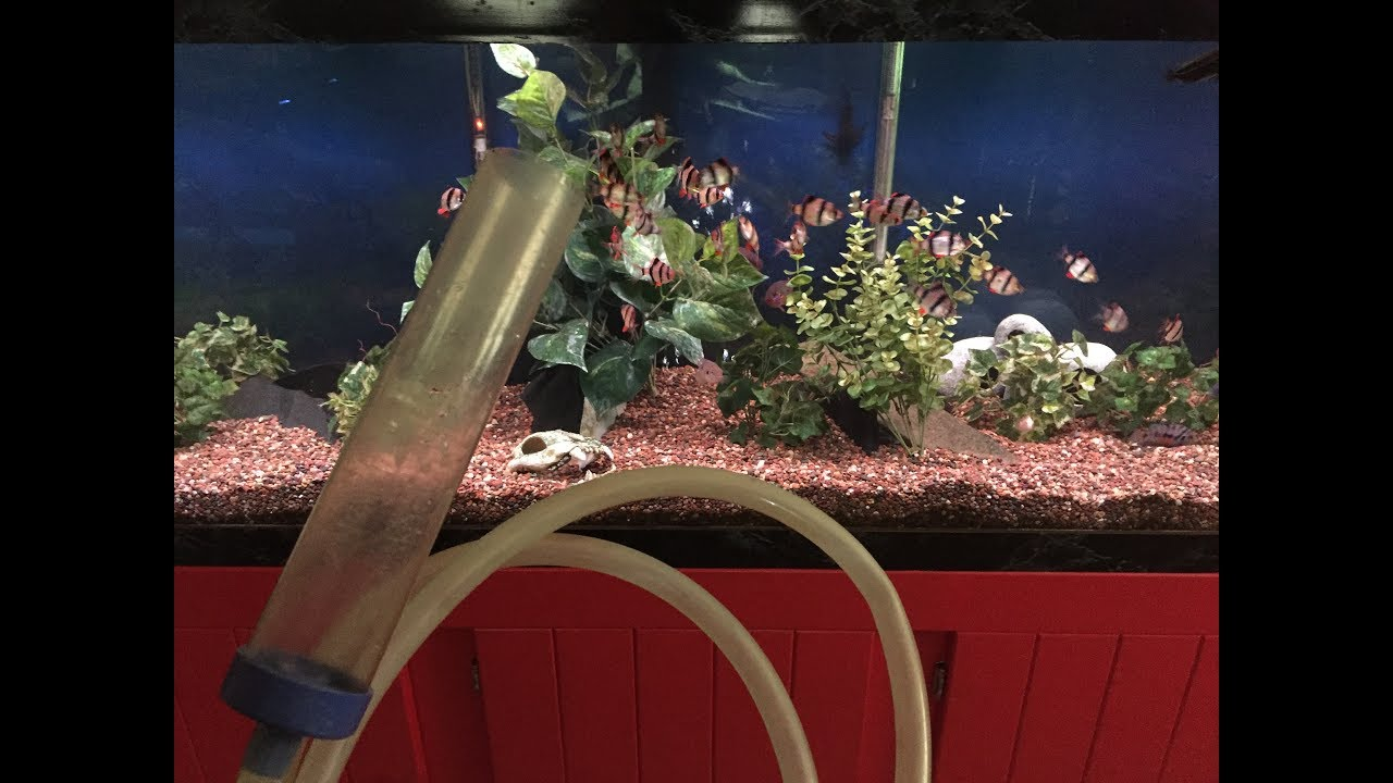 how to use a syphon to clean fish tank