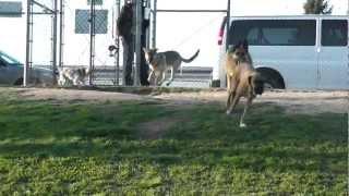 Dog Park Reunion