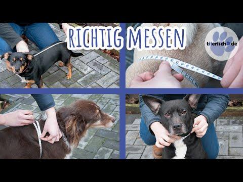 Hundemantel | Hund ausmessen | So bestimmt ihr die richtige Größe!