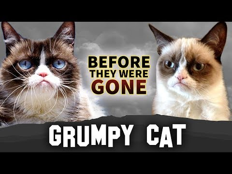 Grumpy Cat  Before They Were Gone  Tardar Sauce