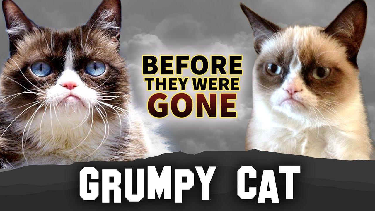 Grumpy Cat   Before They Were Gone   Tardar Sauce - YouTube Tardar Sauce