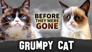 Grumpy Cat | Before They Were Gone | Tardar Sauce