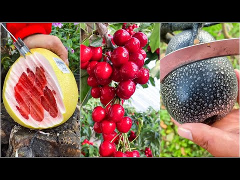 😍Farm Fresh Ninja Fruit | Tik Tok China | (Oddly Satisfying Fruit Ninja) #23