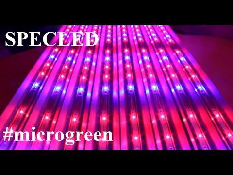 Линейные LED фитолампы для микрозелени или рассады. Фитолампы для стеллажаиз YouTube · С высокой четкостью · Длительность: 4 мин14 с  · Просмотров: 462 · отправлено: 07.12.2017 · кем отправлено: Specled-store.com