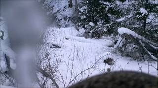 4 Months of Sasquatch Canyon on 6 Game Cams