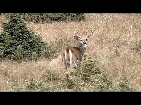 The Best Weather for Deer Hunting is What You're Hunting In - Land of Whitetail, Full Episode
