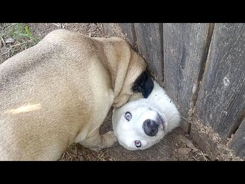 Best of WEIRD FUNNY DOGS – How long CAN YOU HOLD YOUR LAUGH?