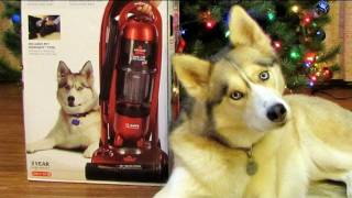 Shelby on the Bissell Vacuum Cleaner Box! Siberian Husky Lift off Multi-Cyclonic Pet Dog