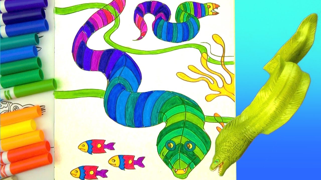 Learn to color - coloring pages - Moray eel - fun facts - coloring ...