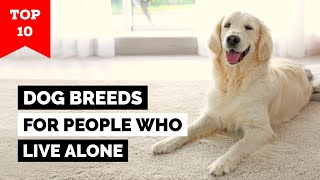 Top 10 Best Dog Breeds for People Who Live Alone