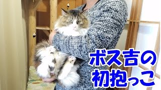保護猫ボス吉、感動の初抱っこ Carrying Boss Cat in My Arms for the First Time.