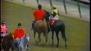 Forego leads post parade at the 1978 Marlboro Cup + Race