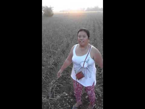 onion farm of the philippines. NUEVA ECIJA