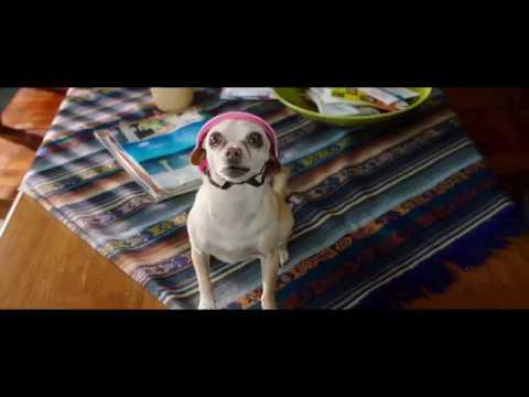 Par amour des chiens - Bande-annonce officielle