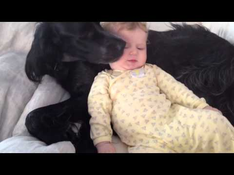 Cute Baby French Kissing Dog