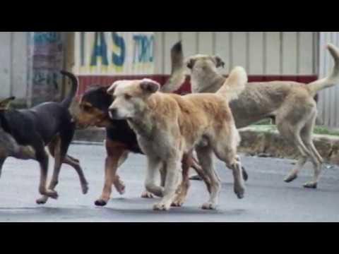 Fármaco para controlar reproducción en la especie canina - UNAM Global