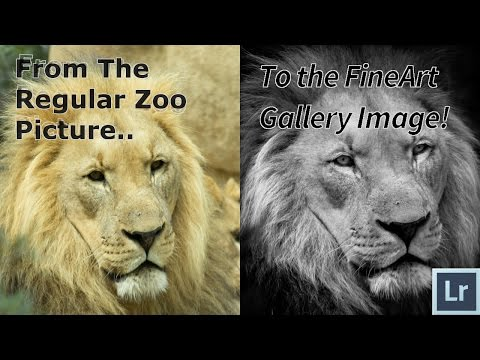 How To Edit Wildlife And Zoo Photos in Adobe Lightroom 6 CC The ULTIMATE Tutorial and Guide