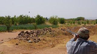 Chasse à la tourterelle au Maroc 2013