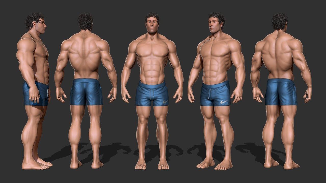 zBrush - Anatomy Study - Male Bodybuilder - YouTube