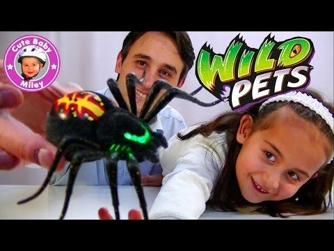 Wild Pets Spinne mit Terrarium - SPIDER ATTACK !!! - Kanal für Kinder