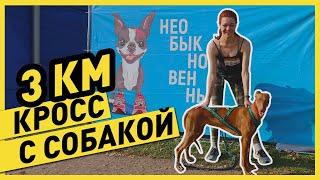 БЕГ С СОБАКОЙ | Бежим каникросс 3 км с моей собакой (🥵 без подготовки!)... это вам не хаски 😅