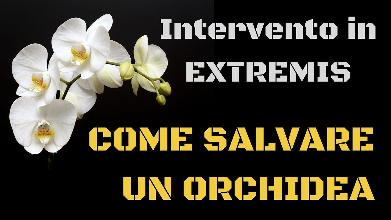 Come Far Morire Una Pianta come salvare un'orchidea - tutorial intervento in extremis -