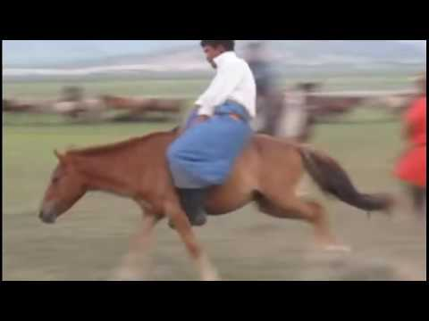 The Wrong Way To Start A Horse - Mongolian Horse Training