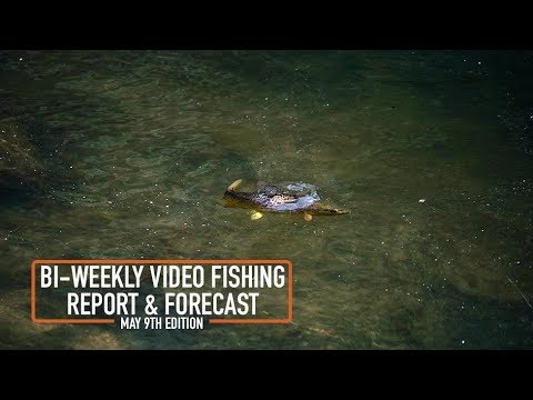 Bi Weekly Fishing Report & Forecast - May 9th Edition