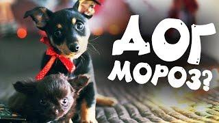 Новогодняя сказка про собак: что собаки загадывают Догу Морозу?