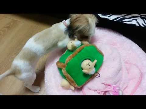 zippy-paws---hide-and-seek-sheep-toy-(1)