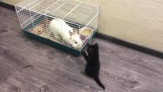 Маленький котёнок и зайка