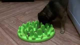Обзор, интерактивная миска для собак