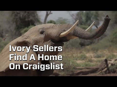 There's A Big And Unregulated Ivory Trade On Craigslist
