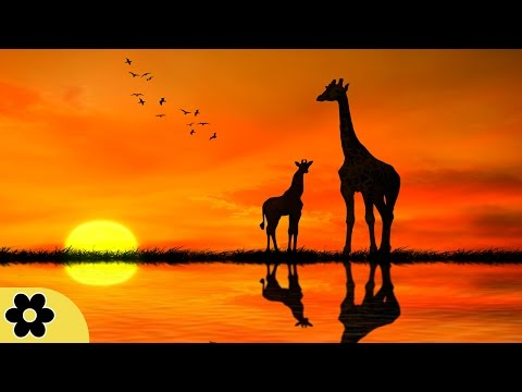 Meditation Music Relax Mind Body, Positive Energy Music, Rel