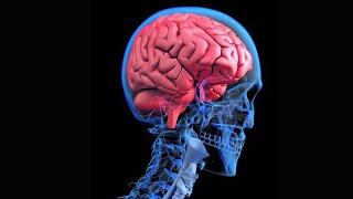 Alzheimer merupakan salah satu penyakit dimensia yang menyebabkan kelumpuhan otak. Perlu diwaspadai .