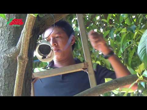 Nông dân tự chế hệ thống báo động chống trộm bảo vệ vườn cây trái