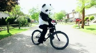 Everything is Better in a Panda Costume