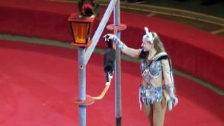 Кошки. Цирк. Кошки канатоходцы в цирке. Cats. Circus. Cats as the ropewalkers in the circus.