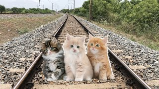 cats on  track STOPS The Highspeed Train and escapes in TrainZimulator