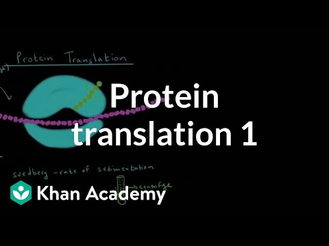 Protein Translation 1