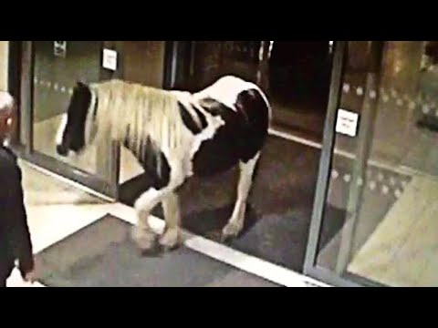 Craziest Things Caught on Security Cameras & CCTV