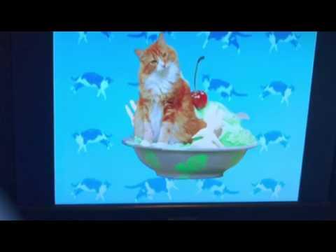 Elmo's World: Cats Quiz