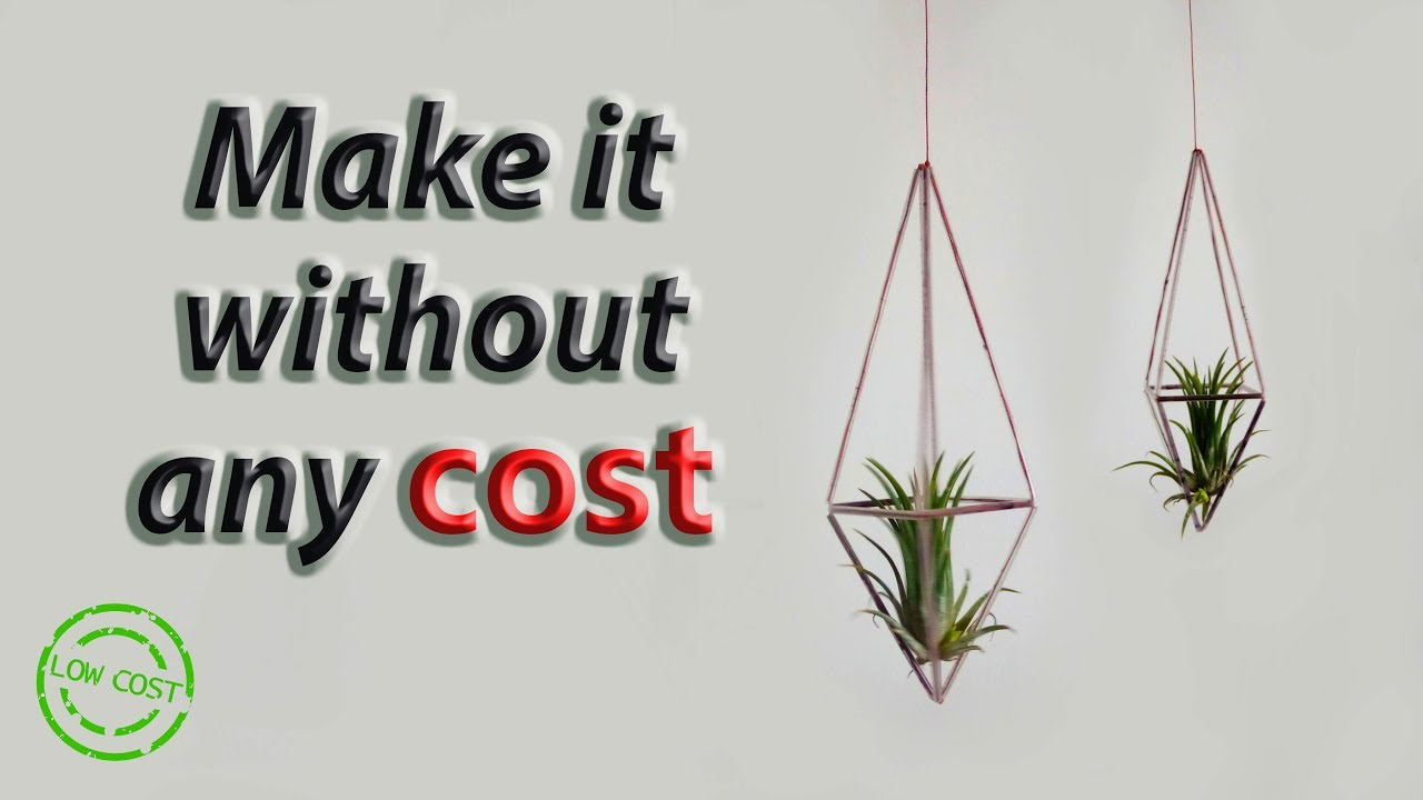 Easily Made Air Plant Hangers Without Any Cost