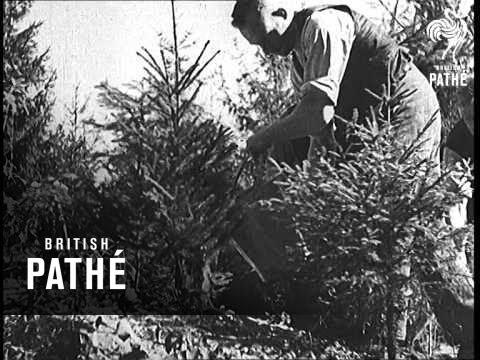 Germany's Western Defences - Siegfried Line (1938)