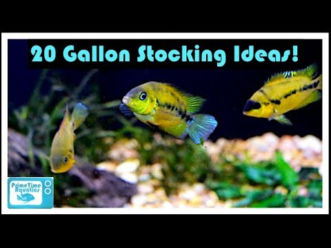 20 Gallon Fish Tank Stocking Ideas: Something Different!