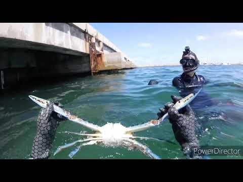 Spearfishing & Snapper Guardians [Perth] EP5