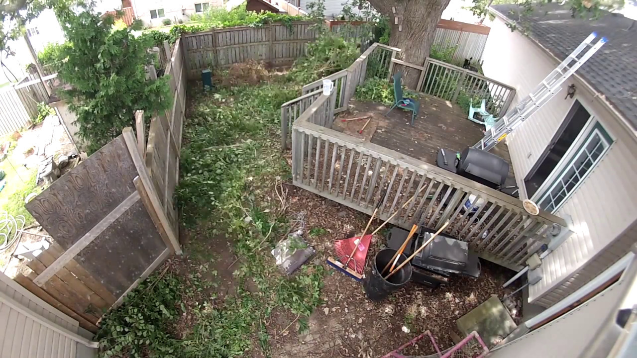 how to clear an overgrown backyard timelapse youtube